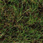 garden b slider img 4